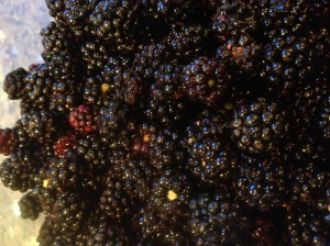 blackberries close up - Copy