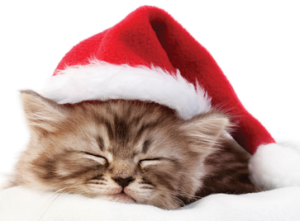 sleeping christmas kitten