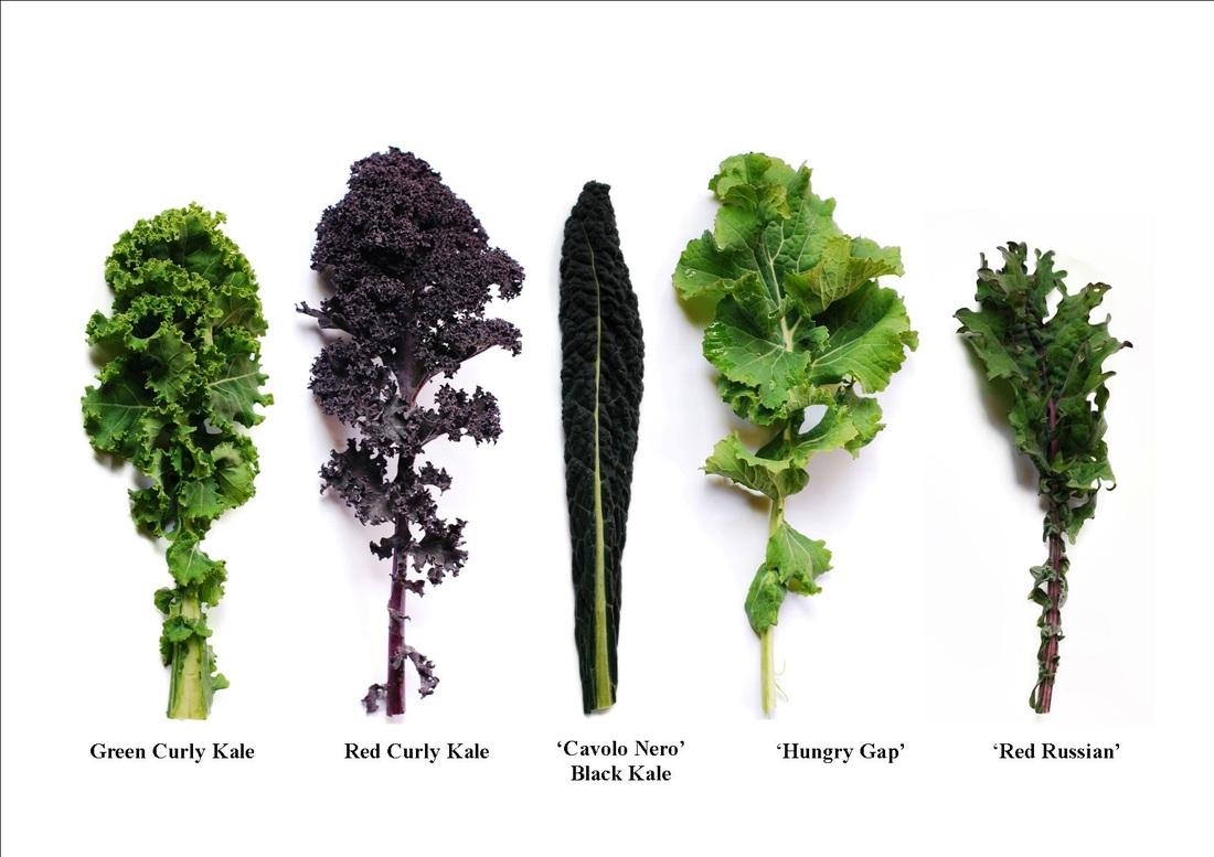 Whats kale