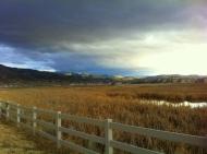 the wetlands Damonte ranch feb 2014 5