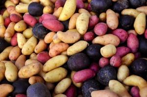 cheryl-winter-potatoes-big