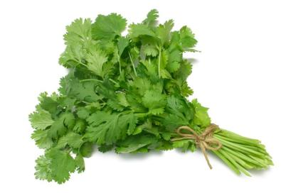 coriander/ cilantro